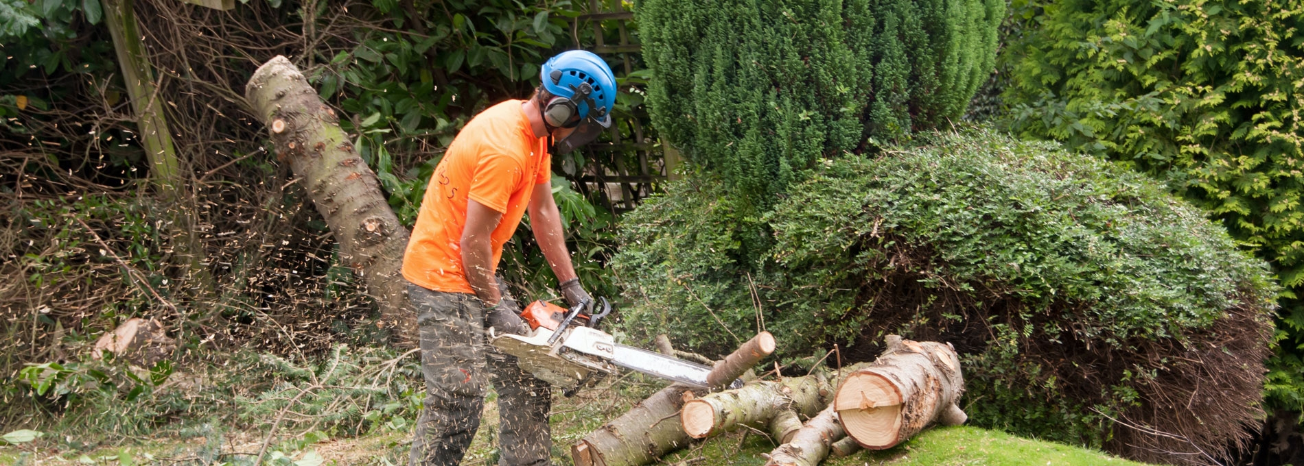Thorney Tree Services